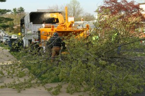 tree removal gaston county