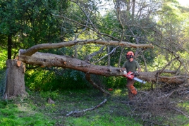 Flower Mound, TX Tree Care Services