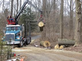 Newark, DE Tree Removal Services