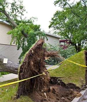 Emergency Tree Care Services