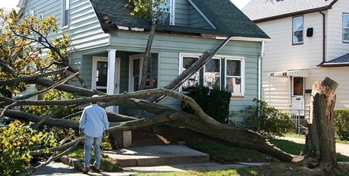 Tree Removal Services from Monster Tree Service