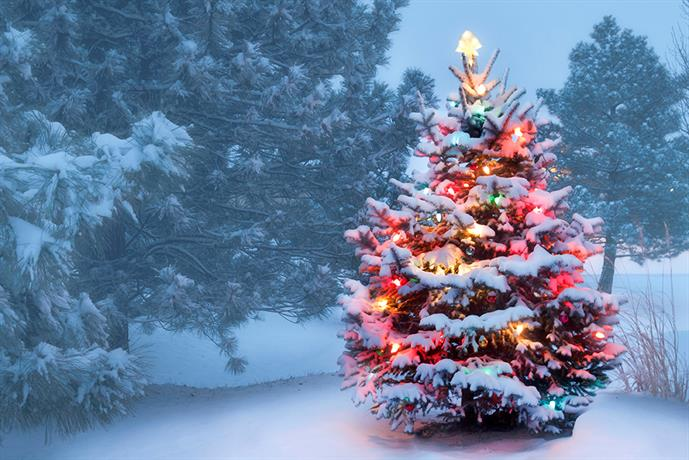 The Perfect Gift For Christmas - Tree Pruning & Removal