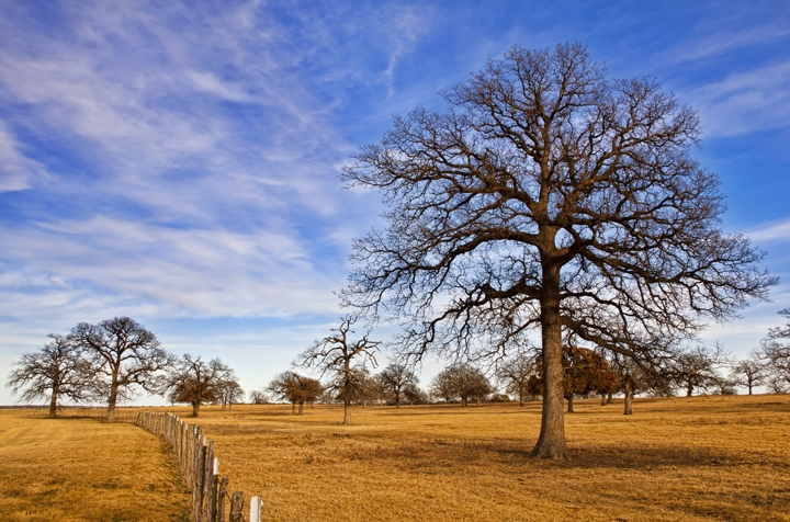 Tree Care Services for Dallas, TX Winters