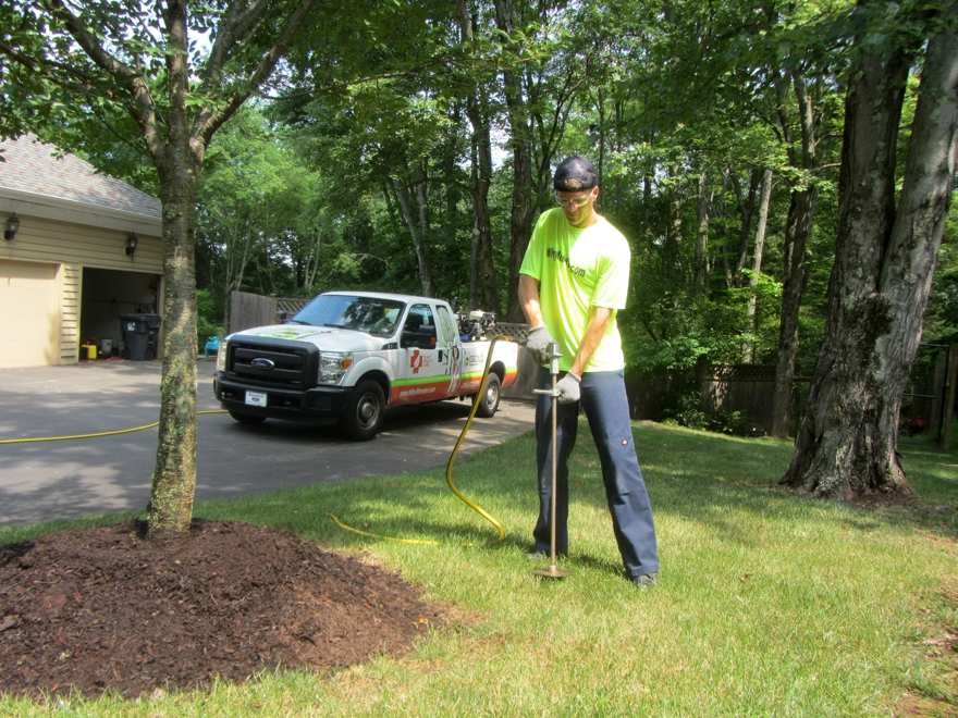 Plant Health Care from Monster Tree Service