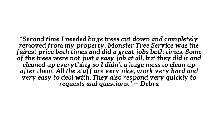 "Review: ""Second time I needed huge trees cut down and completely removed from my property. Monster Tree Service was the fairest price both times and did a great jobs both times. Some of the trees were not just a easy job at all, but they did it and cleaned up everything so I didn't a huge mess to clean up after them. All the staff are very nice, work very hard and very easy to deal with. They also respond very quickly to requests and questions."" - Debra"