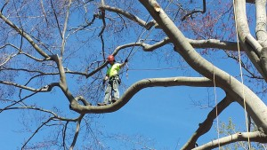 tree service chadds ford pa