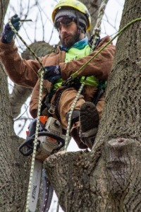 Coatesville, PA Tree Removal Services
