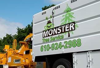 Edina, MN Tree Removal Service