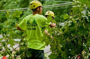 Tree Care Services in Center Valley, PA
