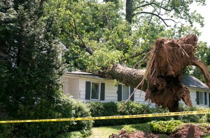 Rocky River, OH Tree Removal Services