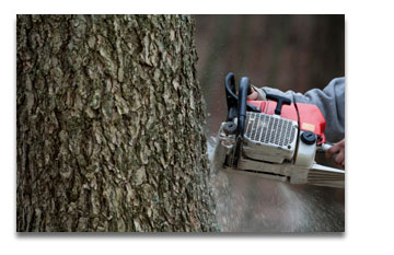 St Louis Park Mn Tree Services Monster